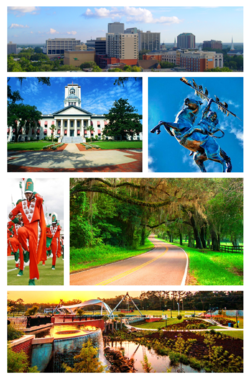 Top, Left to Right: Tallahassee Skyline, Florida Capitol Buildings, Unconquered statue of Osceola and Renegade at FSU, FAMU's Marching 100, Old St. Augustine Canopy Road, and Cascades Park