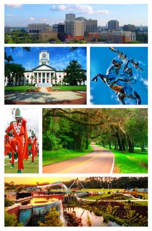 Topp, fra venstre til høyre: Tallahassee Skyline, Florida Capitol Buildings, ikke erobret statue av Osceola og Renegade ved FSU, FAMUs Marching 100, Old St. Augustine Canopy Road og Cascades Park