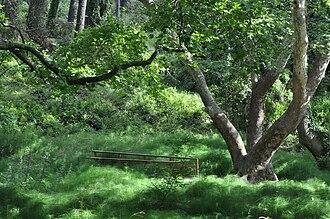 Tatoi Palace - King's Forest.