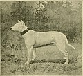 The American book of the dog. The origin, development, special characteristics, utility, breeding, training, points of judging, diseases, and kennel management of all breeds of dogs (1891) (17497342253).jpg