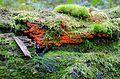 The Babia Gora Biosphere Reserve, Poland (5).jpg