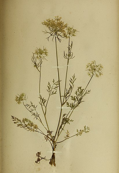 File:The British farmer's plant portfolio - specimens of the principal British grasses, forage plants and weeds - with full descriptions (1896) (14780231635).jpg