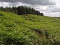 The Comb - geograph.org.uk - 1412774.jpg