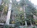 The Grotto, Portland, Oregon (2014) - 41.JPG
