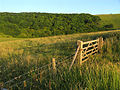 The Northern Side of Uffington Wood - geograph.org.uk - 26025.jpg