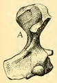 The Osteology of the Reptiles-178 kj jh.png