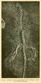 The Osteology of the Reptiles-234 rty.png
