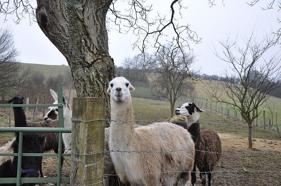 The Pasture, Mousson, Lorraine, France