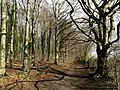 The Wolds Way in Little Wold Plantation - geograph.org.uk - 722048.jpg