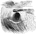 The albatross in the hollow of a wave.png