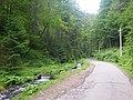 The way to Lake Synevir.jpg