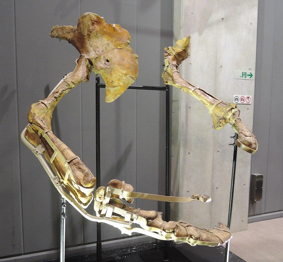 Therizinosaurus arms