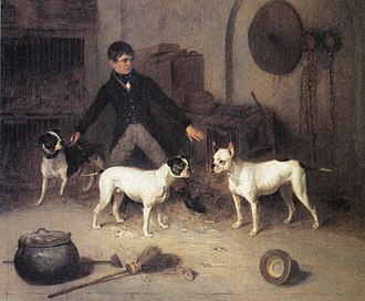 Old English Bulldog - Kennel boy and bulldogs, 1843.