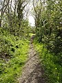 Threave Estate Walk on former Kirkcudbright Railway - geograph.org.uk - 14885.jpg