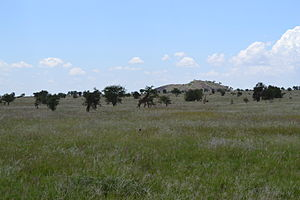 Three Giraffa camelopardalis tippelskirchi individuals north of Lion Rock within the LUMO Community Wildlife Sanctuary in Kenya 3.jpg