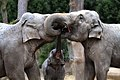 Three elephant's curly kisses.jpg