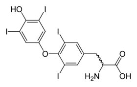 Molecular structure of the thyroxine molecule
