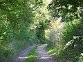 Track near Vernham Dean - geograph.org.uk - 982011.jpg