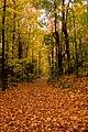 Trail (1539749354).jpg