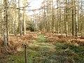 Trail in Troston Forest - geograph.org.uk - 691385.jpg
