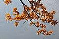 Trebon Wittingau (38585028952).jpg