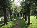 Tree-lined Approach to the Church in Shipton-on-Cherwell - geograph.org.uk - 966463.jpg