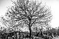 Tree 2180302 (247983867).jpeg