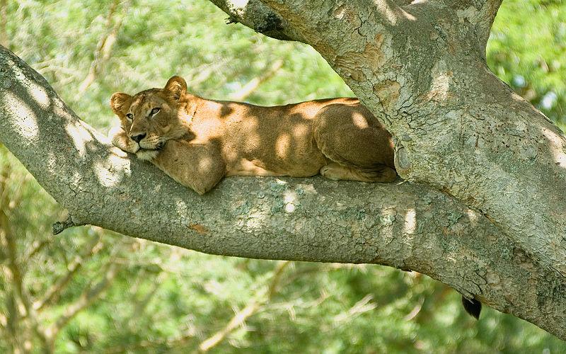 File:Tree lion 2.jpg