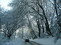 Trees in snow - panoramio.jpg