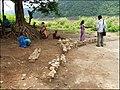 Tribal women selling handicrafts at Paapikondalu in Eastern ghats.jpg