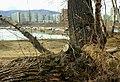 Tsentralnyy rayon, Krasnoyarsk, Krasnoyarskiy kray, Russia - panoramio (57).jpg