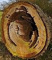 Tumbled Trunk - geograph.org.uk - 1205131.jpg