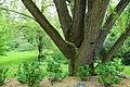Tyler Arboretum - DSC01893.JPG