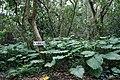 Ufu-daki Kohamajima Okinawa Japan03s3s4592.jpg