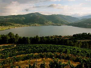 Galician wine - Vineyards in Galicia are influenced by the high humidity and close proximity to the Atlantic.