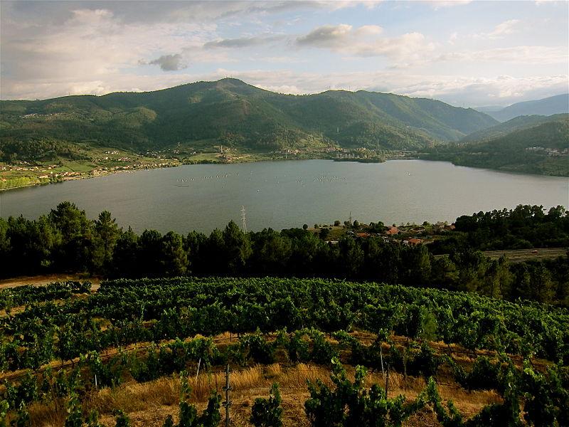 Rias Baixas vineyard, Galicia - Enrique Dans