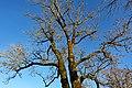 Upper Bavaria - 2019-02-16 Chiemsee 075 Fraueninsel (46282914885).jpg