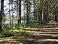 Uzvaras iela 3, Gauja, Carnikavas novads, LV-2163, Latvia - panoramio.jpg