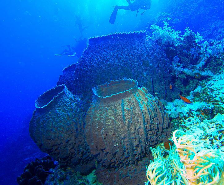 Tiere die in den Riffen und Meeren leben (auch an Küsten) :: Riffe ...