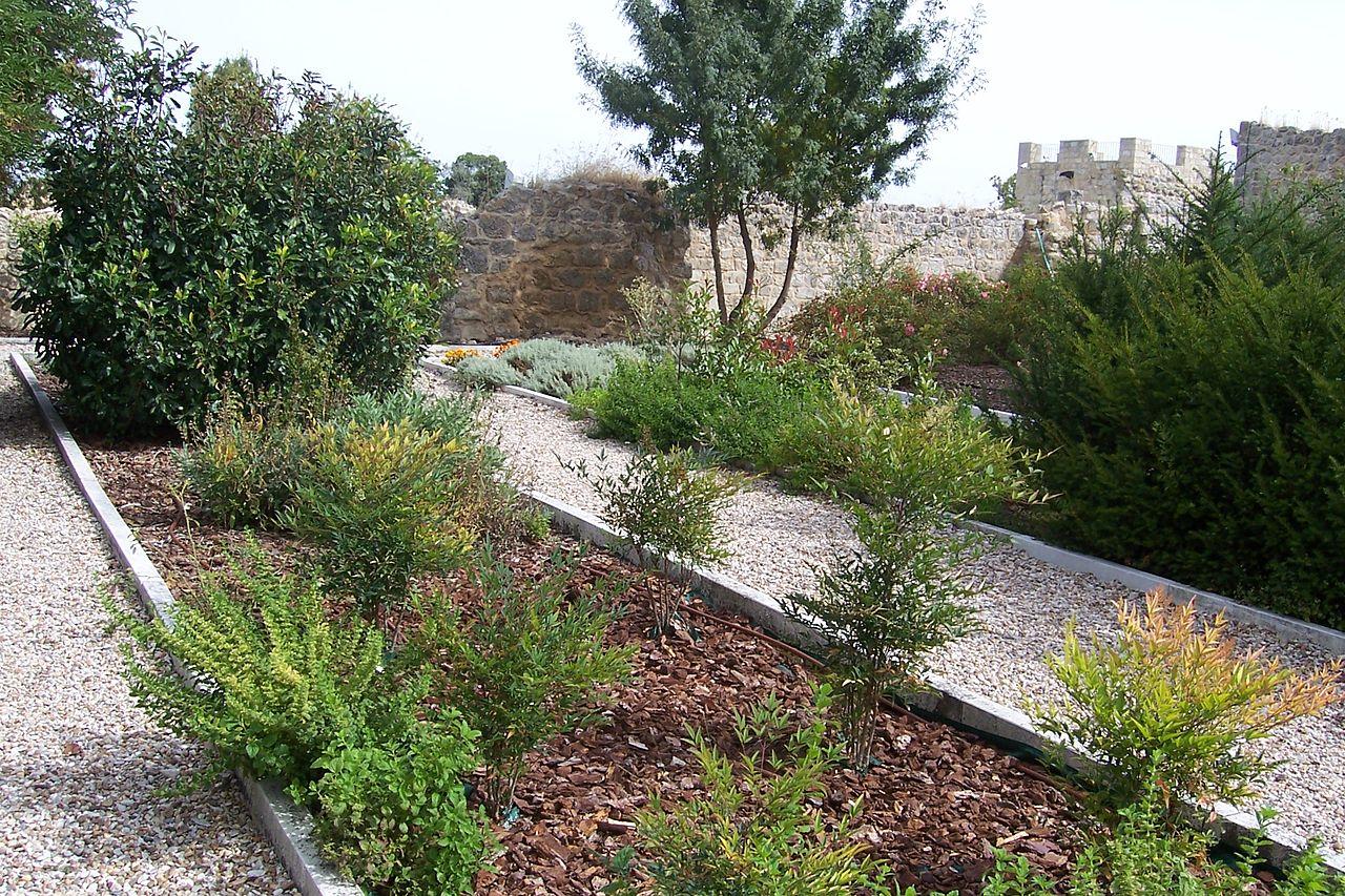 Plantas aromaticas de jardin excellent imagen with for Jardines verticales wikipedia