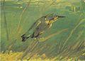 Van Gogh - Eisvogel.jpeg