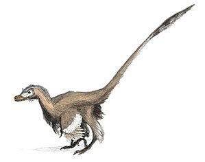 Velociraptor - V. mongoliensis restored by Matthew Martyniuk (2006) showing the large wing feathers evidenced by fossil quill knobs.