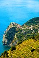 Vignoble en terrasses de Corniglia.jpg