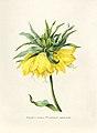 Vintage Flower illustration by Pierre-Joseph Redouté, digitally enhanced by rawpixel 01.jpg