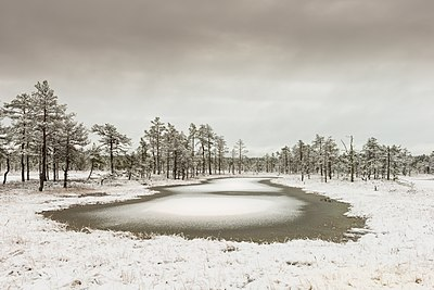 Viru Bog at winter.jpg