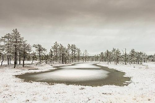 Viru Bog at winter.jpg