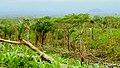 Vista hacia el este, desde La Comunidad el Susto, Alamikamba. - panoramio.jpg