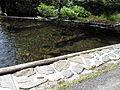 Vylet k Cernemu jezeru Sumava - 9.srpna 2010 126.JPG