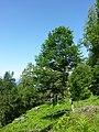 Waldreservat Plontabuora2.jpg