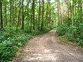 Waldweg bei Holm - geo.hlipp.de - 23964.jpg